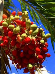 Fruit.DR